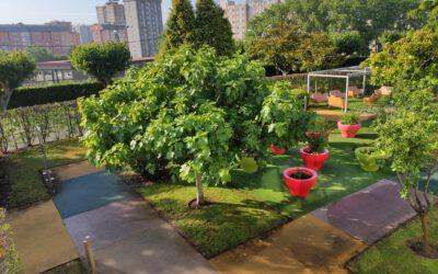 Acondicionamiento jardines